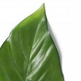 Blätter Ilha, Miniaturansicht 5