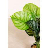 Planta Artificial Decorativa Calatea, imagen miniatura 3