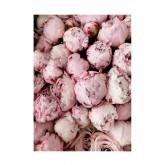 Lot de 2 tableaux décoratifs (50x70 cm) Rose Love, image miniature 2